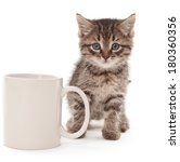Kitten With Coffee Cup Isolate...