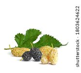mulberry low poly. fresh ... | Shutterstock .eps vector #1803624622