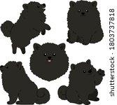 flat colored black pomeranian...   Shutterstock .eps vector #1803737818