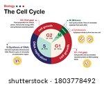 biology diagram show... | Shutterstock .eps vector #1803778492