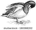 wild duck | Shutterstock . vector #180388202