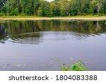 A Photograph Of A Little Pond...