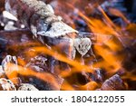 Burning Felled Trees And Logs...