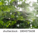 Web On A Bush In The Forest....