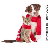 Stock photo cat and dog with shawl sick 180460718