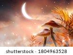 Magical Fantasy Mushrooms...