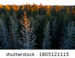 Estonian Boreal Forest With...