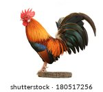 beautiful rooster on white... | Shutterstock . vector #180517256