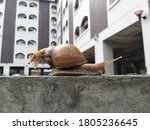 A Snail Crawling On The Wall ...