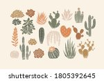 Various Cactus Collection....
