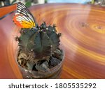 Butterfly With Orange And...