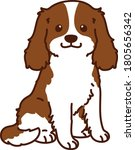 outlined brown cavalier king... | Shutterstock .eps vector #1805656342