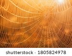 Spider Web Covered With Dew In...