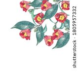 Watercolor Painting Of Camellia ...