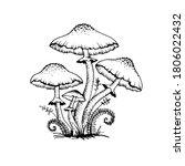 vector drawing of black white... | Shutterstock .eps vector #1806022432