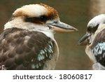 australian kookaburra pair... | Shutterstock . vector #18060817