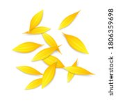 pile of sunflower  calendula or ...   Shutterstock .eps vector #1806359698