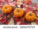 Beautiful Mini Pumpkins On...