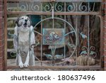 Dog Barking Through The Fence....
