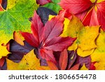 Collection Of Different Autumn...