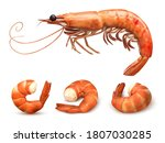 shrimp or prawn set. delicious... | Shutterstock .eps vector #1807030285