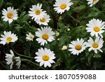 Close Up View Of A Bunch Of...