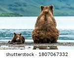 Mother Bear With Cub On The...