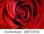 Stock photo close up on a red roses covered with dew 180710726