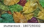 Multicolored Autumn Fallen...