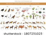 desert biome  xeric shrubland... | Shutterstock .eps vector #1807251025
