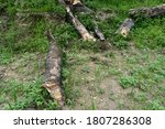 Old Trees Left Broken On The...