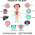 informative organs of the body... | Shutterstock .eps vector #1807369588