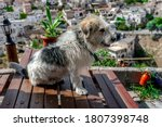 Street Dog Standing On Table....