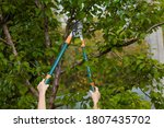 Small photo of The gardener's hands are cut off with special pruning shears, fruit trees in the garden. Plant care, tree pruning.