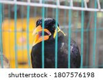Bird Cage Myna Bird Talking...
