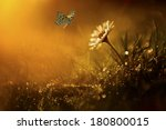 Butterfly And Daisy Wild Flowe...