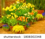 Arrangement Of Potted Flowers ...