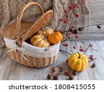 A Group Of Mini Pumpkins In The ...