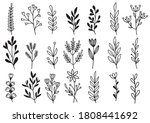 collection forest fern... | Shutterstock .eps vector #1808441692