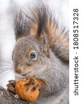 Portrait Of A Squirrel With Nu...