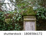 A Gravestone With Ivy On A...