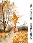 Woman Hand And Autumn Leaves