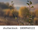 Spider Web In The Morning In...