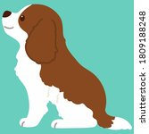 flat colored brown cavalier... | Shutterstock .eps vector #1809188248