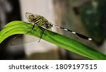 A Dragonfly Perched On A Green...