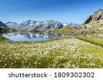 Mountain Lake With Cotton Grass ...