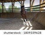 Horse During Longeing Training...