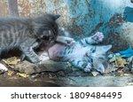 Little Stray Cat Kittens Play...