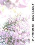 flower of erica in full blooming | Shutterstock . vector #1809633085