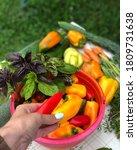 Basket Of Fresh Vegetables....